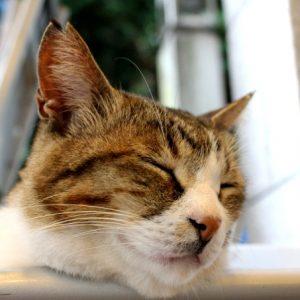 湘南・鎌倉にいるとびきりキュートな看板猫に会いに行こう