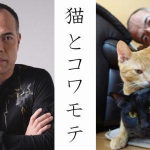お正月は愛猫と一緒に『猫とコワモテ』を観よう♪