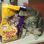 あなたにはわかりますか!?トリックに隠された猫たち