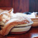 さむーい季節……お鍋はいかが?見ているだけで暖かい、「ねこ鍋」画像まとめ!
