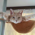 「いったいそこで何をしているの?」思わずツッコミたくなる猫ちゃんたち♪