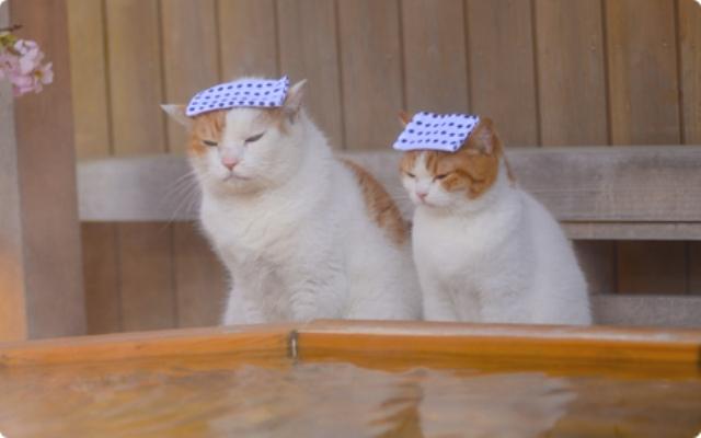 かわいい猫と会える旅? 「じゃらん」CMの「師匠とでし」をまとめてみた