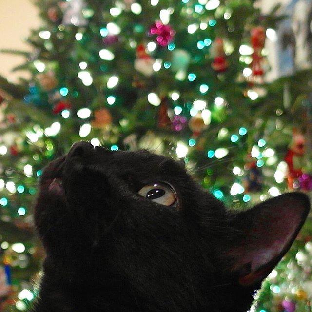 クリスマスアドベント♪猫と一緒に華麗なるクリスマスツリーを作る方法