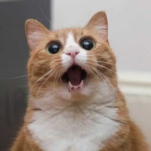 宇宙と交信!?猫の『ケケケ…アニャニャニャ』って大丈夫!?
