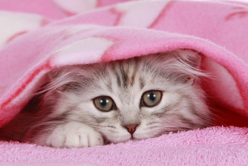 【お悩み】猫が布団で粗相してしまう・・原因と対処法