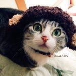 【2016☆申】お約束、干支ジャックするニャ!!