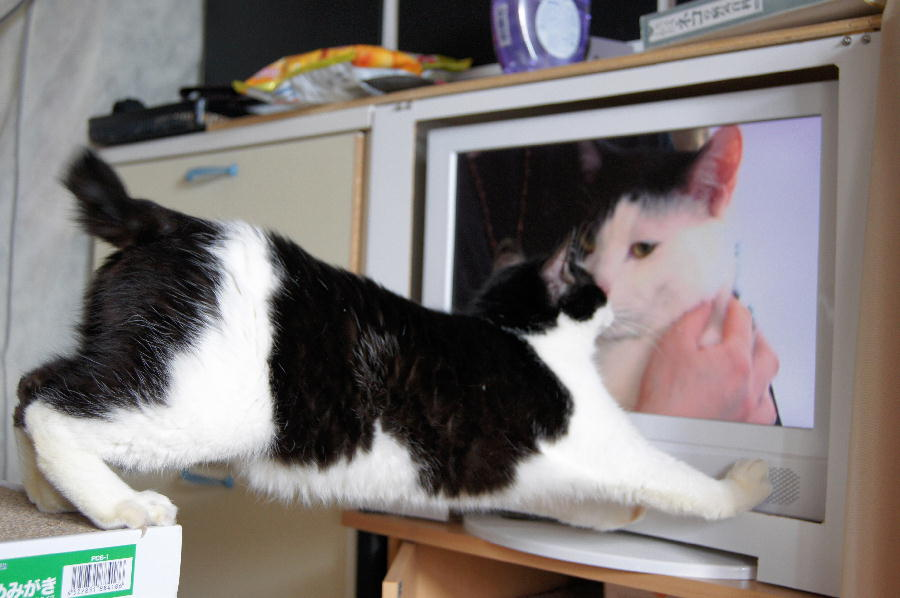 【ジャマかわいい】ちょっとどいて!テレビの前でくつろぐ猫たち
