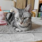 キーボードから猫の声!?癒されるために「KittyKeys」を使ってみたい!