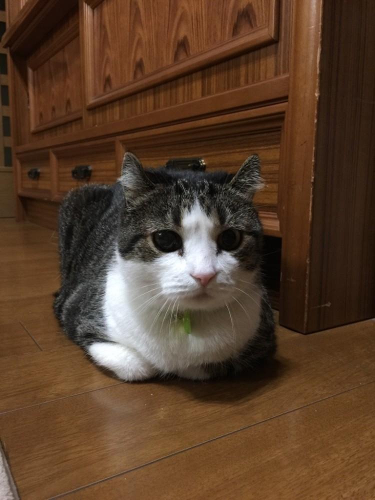 猫を愛する皆さんへ。気をつけて!意外と多い目の変化