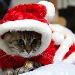 家族みんなでメリークリスマス!予約で買える、かわいい「猫用」ケーキがあるお店3選!