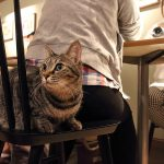 【東京】普通の猫カフェに飽きたら!ちょっと変わったコンセプトの猫カフェ5選