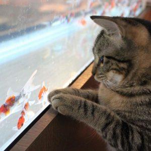 【関西】一度は行ってみたい!「変わったコンセプト」の猫カフェ5選