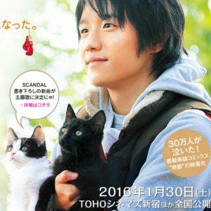 【猫好きさん必見!!】映画「猫なんかよんでもこない」は史上最高にキュートな猫映画です♪