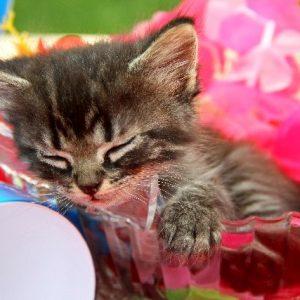 もうすぐバレンタイン♡猫モチーフチョコはねこ好き男子じゃなくてもメロメロ