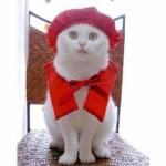 備えあれば患いなし!いつか訪れる猫の老化現象について知ろう!