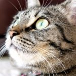 【祝☆猫の日】猫の日には猫の日ならではのイベントに行かなくちゃ!
