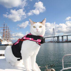 ネコ船長がヨーソロー!海でも頑張るネコさんたち♪