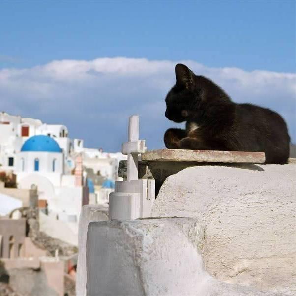 【猫好きさん注目!】世界の猫スポットランキングが発表されました
