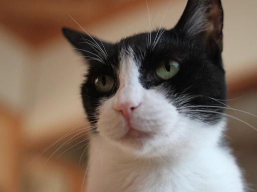 組み合わせは無限大!?猫の模様ってどうなってるの?