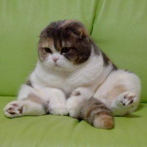 【もしかしておっさん入ってる?】まるで人間!と思えるしぐさが可愛い猫ちゃん画像集めました