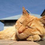 図書館猫「ムクニャン」の不思議で幸せな物語♪