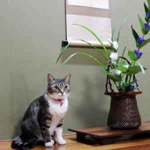 猫女将が挨拶に来てくれる「松伯亭あづま荘」に今すぐ泊まりに行きたい!