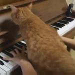 ピアノよりも僕をかまってニャ!!演奏を徹底的に邪魔する猫