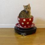 楽しそう(#´ μ `#) コーヒーカップに乗った猫ちゃん