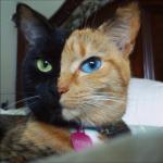 本当に偶然なの? 奇跡的な模様の猫ちゃんたち