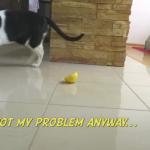これ嫌い!! レモンにエアー砂かけするけど、レモンが隠れなくて必死な猫ちゃん