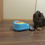 飼い主さんと猫ちゃんでバンド結成! 歌声に合わせて演奏する天才猫ちゃん