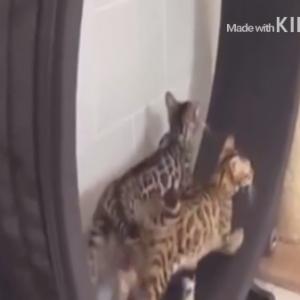 滑車を~、回るよ猫太郎~♪ 大好きなのは~、ひまわりの種~?