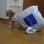 猫と袋は混ぜるな危険?? 袋から抜け切れない猫ちゃん