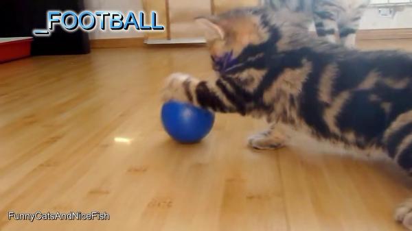 目指せ金メダル! 猫たちのオリンピック開催!?