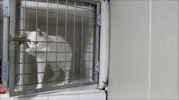 【スゴ技】プロの犯行! いとも簡単に檻の鍵を開ける猫ちゃん