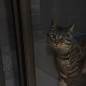 どうしてこうなった(笑) 網戸に挟まった猫ちゃんがお馬鹿可愛くて爆笑!