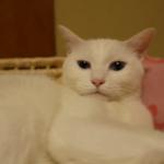 「うにゃ~ぁ」zzz。寝言を言いながら眠る猫ちゃん。どんな夢見てるのかな??