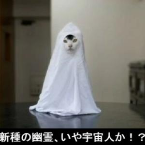 恐怖! 猫の心霊写真・・・!! あなたはどこまで耐え切ることができるか!?