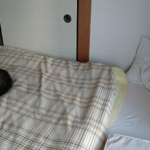 「邪魔だなぁ・・・」 お布団を敷きたい人間と、マットレスで寝る猫