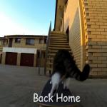 これはすごい! スケートボードを乗りこなす猫