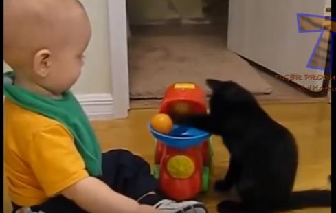 FireShot Capture 2 - 爆笑 婴儿和猫咪 宝宝和小猫 搞笑 - YouTube - https___www.youtube.com_watch_v=ZpnHFPRQlcY