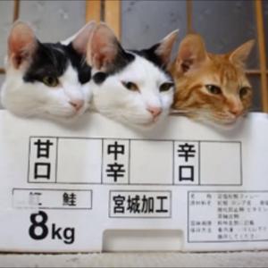 超笑える!ネコの面白い決定的瞬間を撮った画像集(*´ω`*)