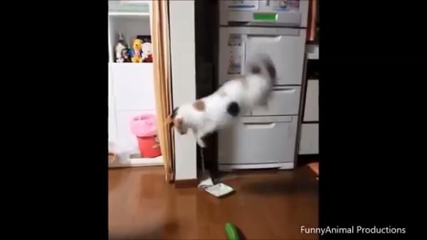 ニャンだこれ!?Σ(゚Д゚)キュウリに驚いて飛び上がるネコたちが可哀そ面白い♪