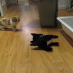 子猫ちゃんVSロボット犬!!!初めて見るロボ犬に後ずさり・・・「だ、だれ????」