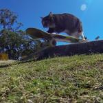これはカッコよすぎる!!スケボを乗りこなす猫!上級テクニックで仲間からも大人気のクールな猫!!