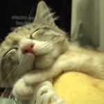 桃のパックの中でスヤスヤ気持ちよさそうに眠る子猫ちゃん♡桃のいい匂いに包まれて熟睡