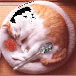 【なるほど納得!!】食べ物にしか見えない猫ちゃんたち画像集