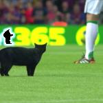スペイン一部リーグの試合中、サッカースタジアムに黒猫乱入!まさかの試合一時中止!!
