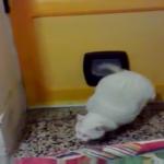 メタボ猫!!小顔なんだけど、下半身太りで玄関から家に入れるか不安・・・