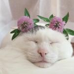 「あたしかわいい?」猫耳の上に花飾りをしてみた。めちゃくちゃかわいいんですけど・・・♡
